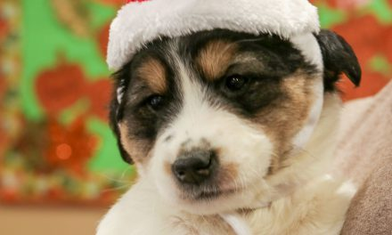 """""""Home for the Holidays"""" adoption promotion available through January 2"""